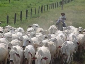 herding prospects in sales