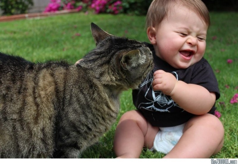 baby playing with cat pictures
