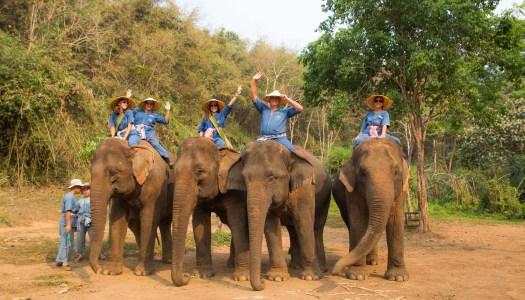 Four Seasons Chiang Rai Tented Camp