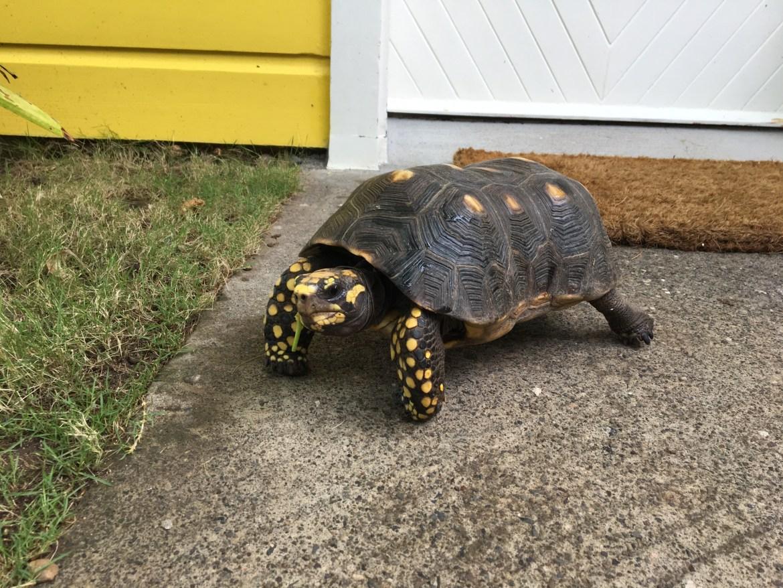 tartaruga le guanahani
