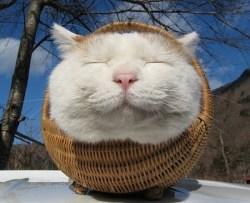 おもしろい猫の画像・写真-むふー
