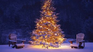 104926__christmas-tree-in-snow_p_02