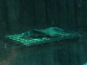 王子動物園のコウモリ