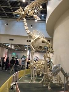 動物科学資料館