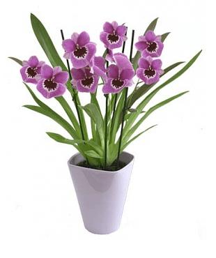flori flora