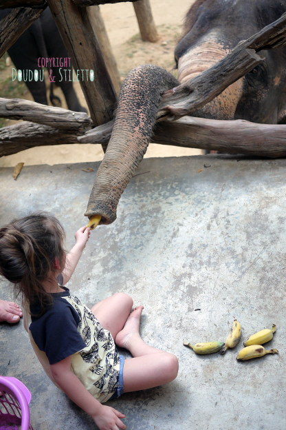 camp éléphant kanchanaburi