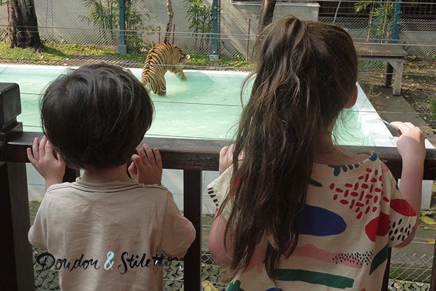 Royaume des tigres