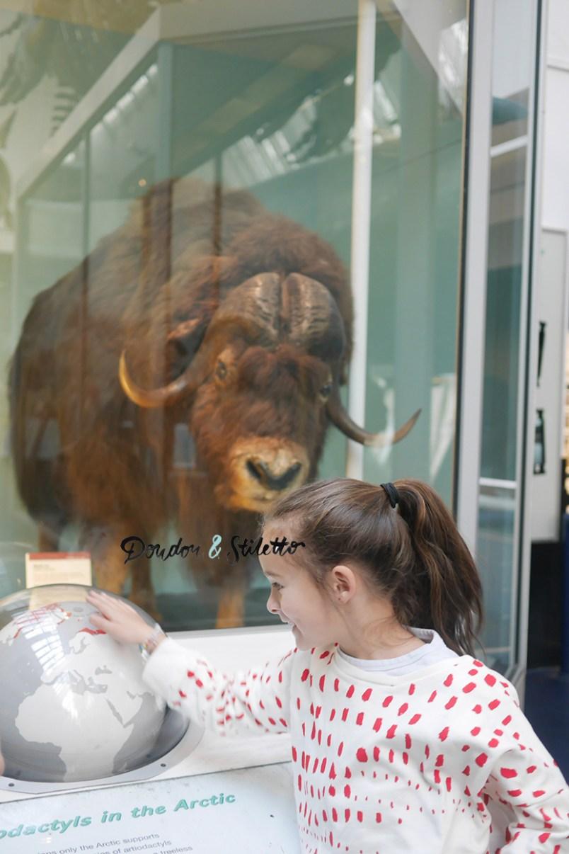Musée d'histoire naturelle londres 2