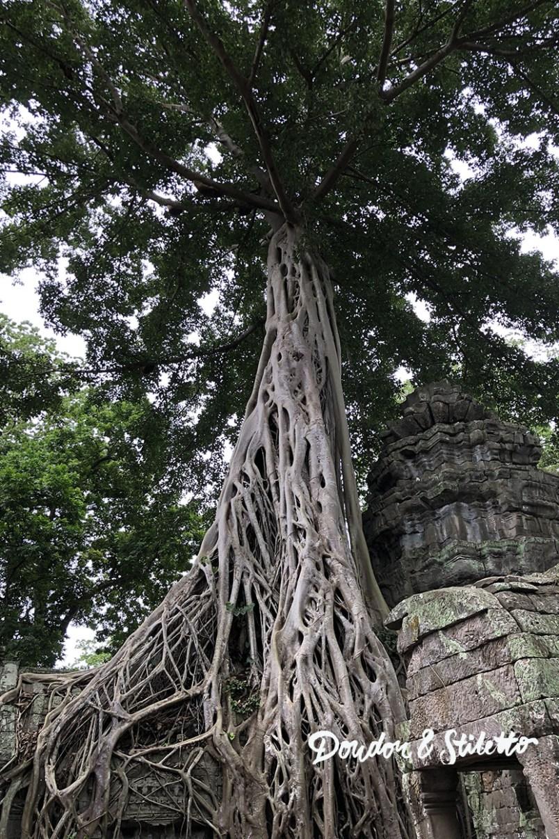 Ta Phrom Angkor 2