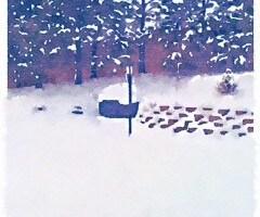 Front Yard Narnia
