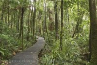 Pic of Real Boardwalk in Forest