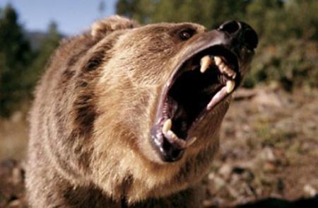 a roar