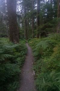 Standard rain forest trail