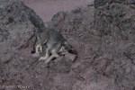 Summit dog