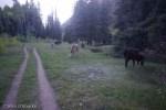 Lliving llamas