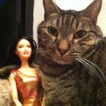 A cat and a doll