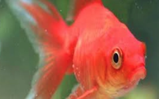 Dream about pregnancy or being pregnant for Fish dream meaning pregnancy