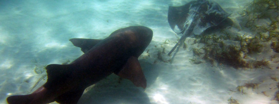 Marinarium – Swim with the Sharks & Stingrays Catamaran Excursion – Punta Cana