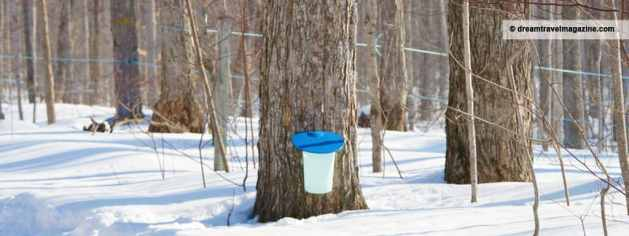 Take a Sweet Road Trip and Tap Into Maple in Ontario's Lakes Country