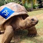 programa-de-edicion-tortuga