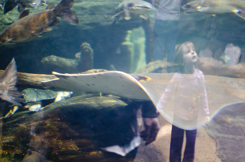 little girl reflection in tank The National Aquarium of Baltimore!