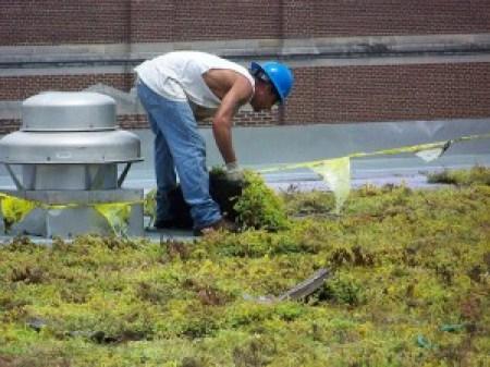 cubiertas-verdes-mantenimientos