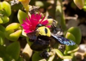 cubiertas-verdes-biodiversidad4