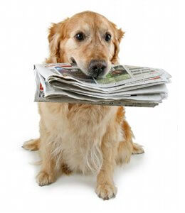 actualite-blog-chien