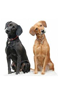 Choisir un chien mâle ou femelle ? Nos conseils...