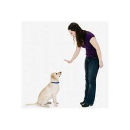 Comment apprendre l&#8217;ordre<br /> assis à son chien ?