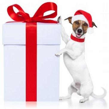 Comment dresser son chien ? Dresser-son-chien.com