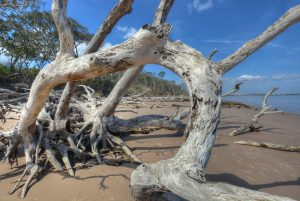 driftwood beach-the boneyard