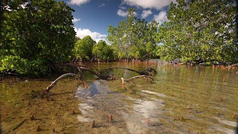 Im Osten Mosambiks liegt die Pomene-Lagune zwischen Indischem Ozean und üppigen Mangrovenwäldern. Bild: ARTE France / © Earth-Touch