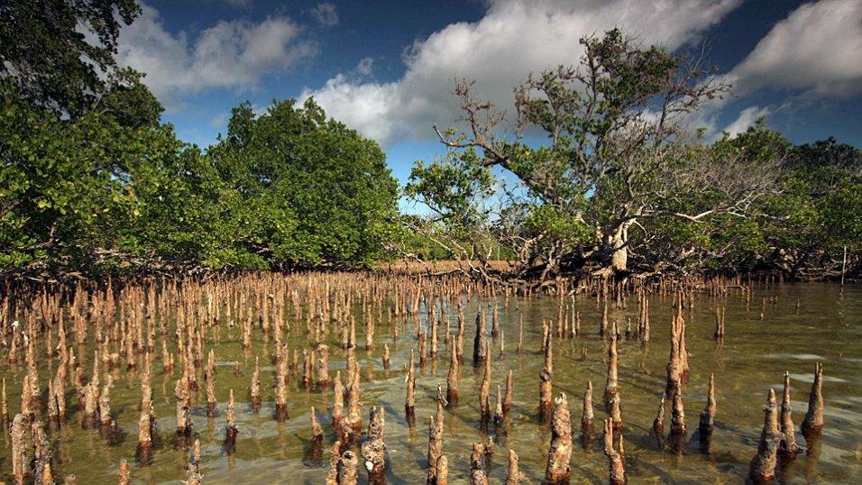 Der Mondzyklus und die Gezeiten bestimmen das Leben in dem kleinsten Naturreservat Mosambiks, das eine einzigartige Fauna und Flora, wie die Mangroven, beherbergt. Bild: ARTE France / © Earth-Touch