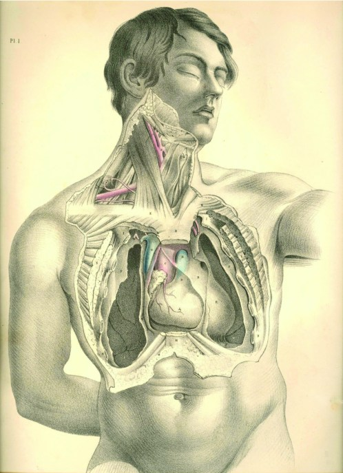 anatomyplate1b