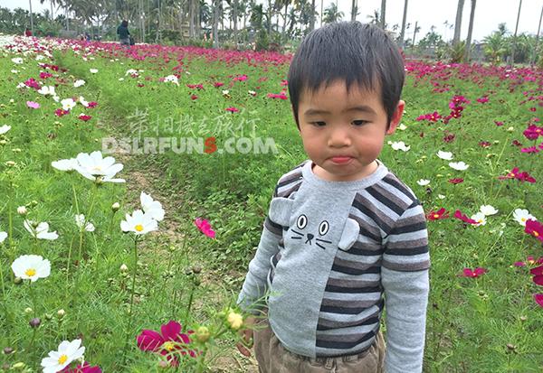 meinong-flower06
