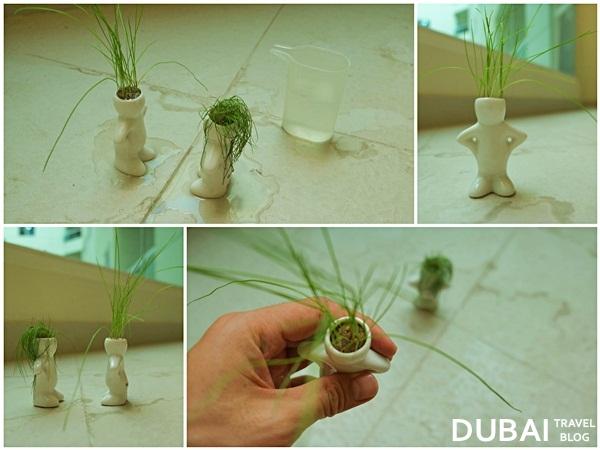 dubizzle plants small