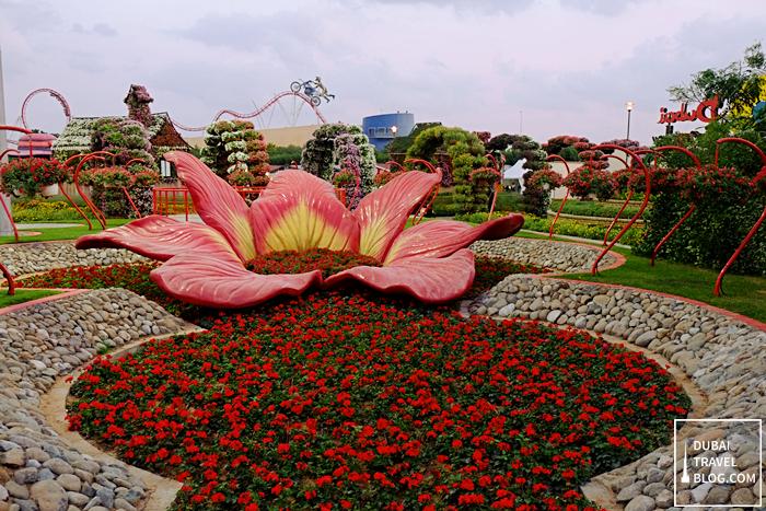 red flowers miracle garden uae