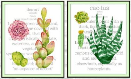 Cactus succulent botanical prints