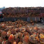 CPO Dihapus dari Bahan Baku Biofuel, Asosiasi Desak Pemerintah Boikot Produk Eropa