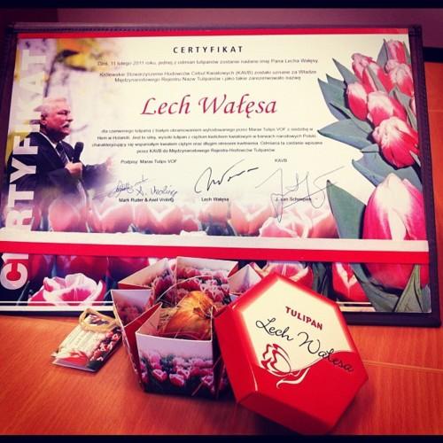 Tulipan Lech Wałęsa - Certyfikat autentyczności nowej odmiany cebulki kwiata stworzonego przez Roberta Stoopa, Holendra mieszkającego na Żuławach