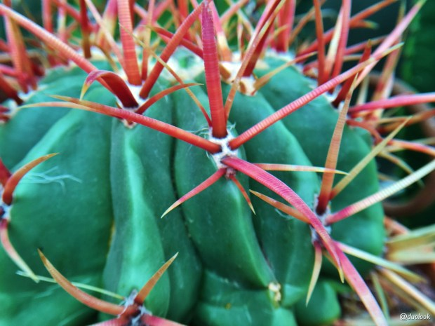 Chelsea-Gardener-londyn-kaktus