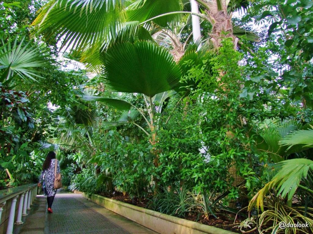 atrakcje londyn palmiarnia kew gardens