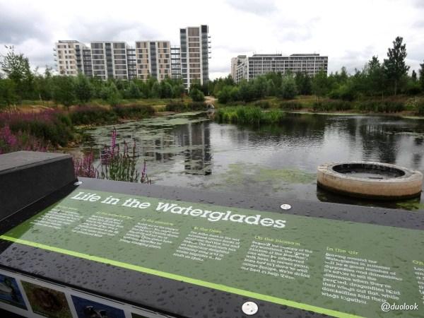 londyn park olimpijski dzika natura
