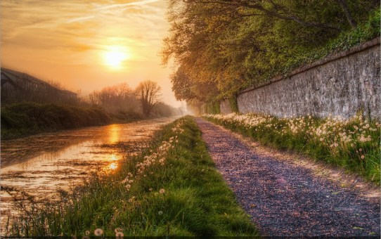 The Royal Canal