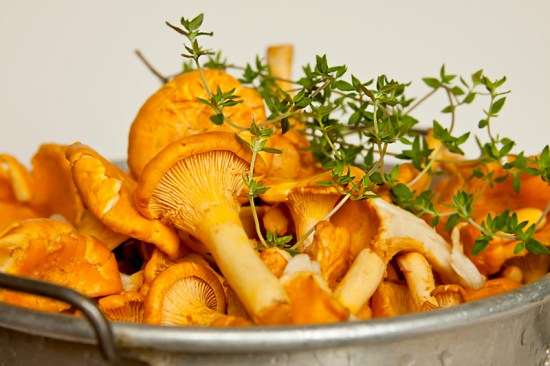 Fresh Chanterelle Mushrooms in Colander
