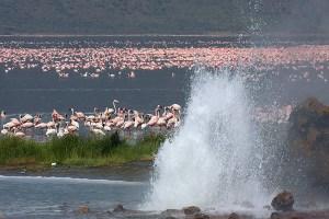 lake-bogoria-ho-springs-kenya-safari