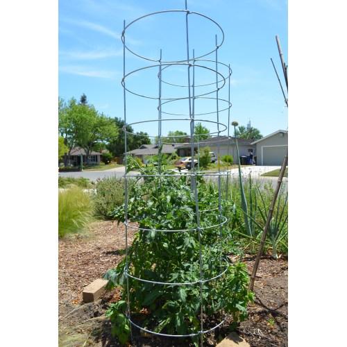 Medium Crop Of Texas Tomato Cages