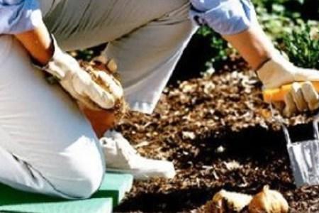 Bulb Planter Tool Makes Gardening Easier