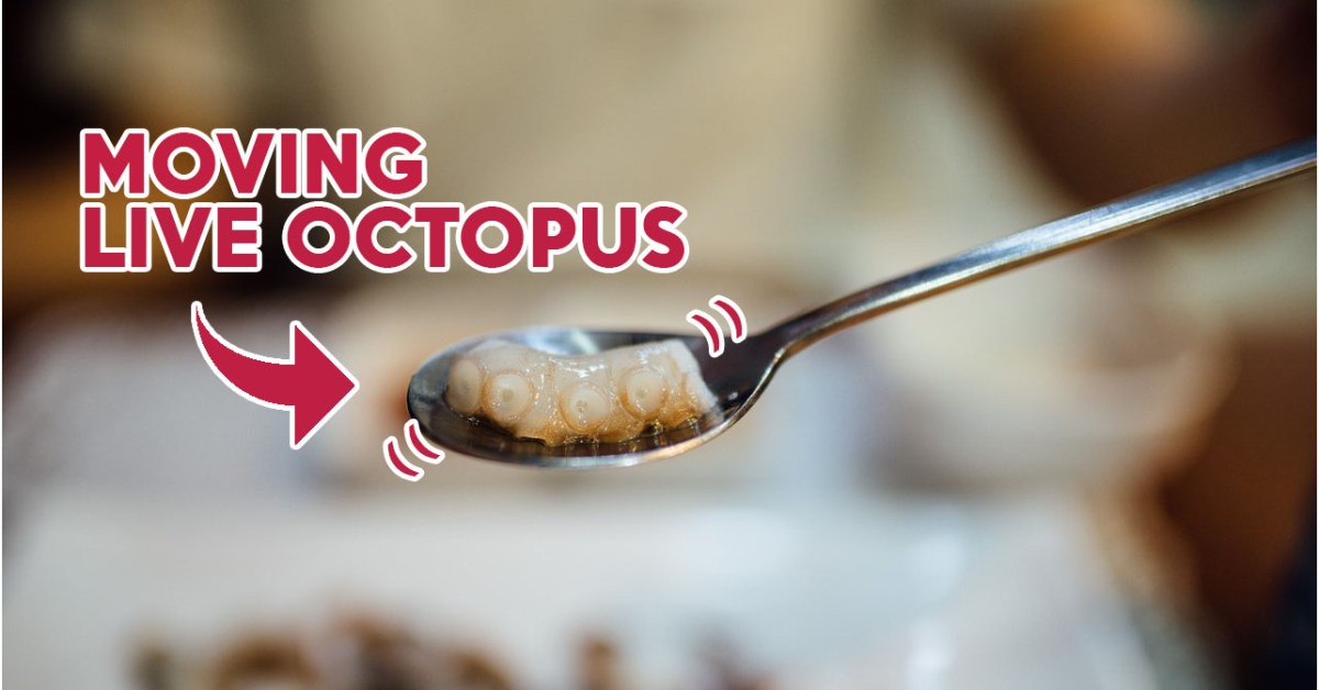 Bukang Tuna Restaurant Review: Wriggling Korean Live Octopus Served On The Spot